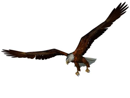 3D rendered eagle on white background isolated Stock Photo