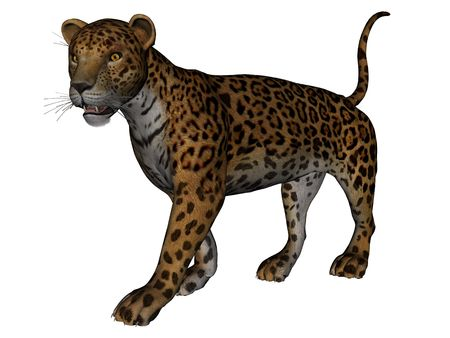 3D rendered jaguar on white background isolated