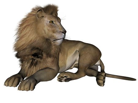 3d lion: 3D rendered lion male on white background isolated