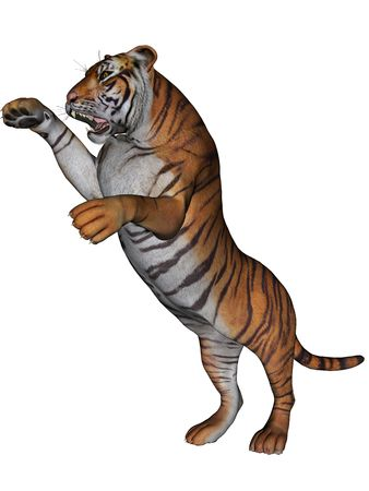 3D rendered tiger on white background isolated