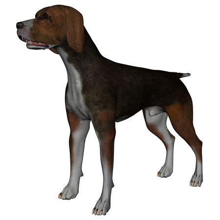 3D rendered hound dog on white background isolated Stock Photo