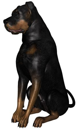 3D rendered rottweiler dog on white background isolated Stock Photo