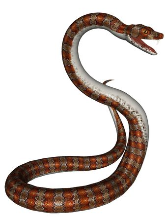 attacks: 3D rendered snake on white background isolated Stock Photo