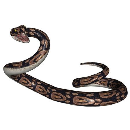 3d snake: 3D rendered snake on white background isolated Stock Photo