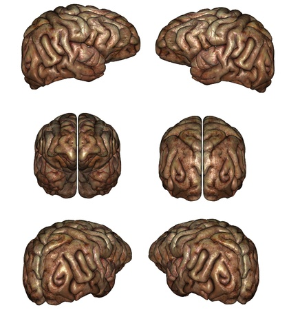 3D rendered human brain on white background isolated