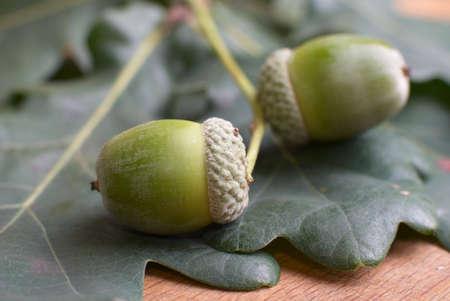 Two acorns and oak leaf. Stock Photo