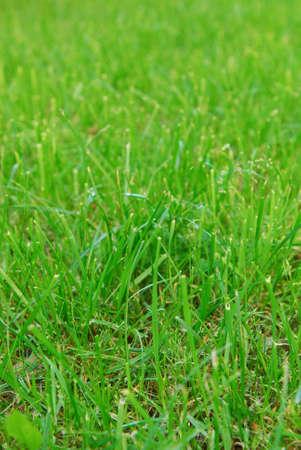 Green summer grass on lawn. Selective focus.