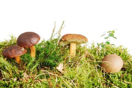 Forest scene with mushroooms isolated on white background.