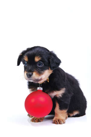 Mongrel puppy with red Christmas ball on white background.  Stock Photo - 3824416