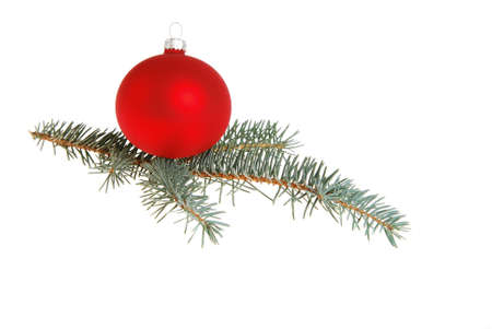 Red Xmas ball on Blue Spruce (Picea pungens) sprig.