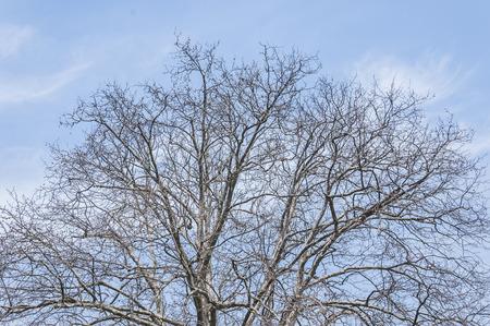 deadwood: Plant