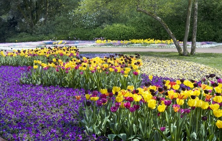 Beds of tulips in a public garden, multicolored blossoms Stock Photo - 8619776