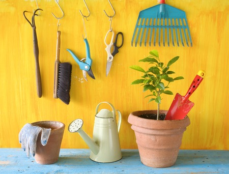 A plant in a flower pot with gardening tools, gardening concept, springtime 스톡 콘텐츠