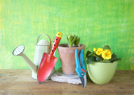 tools: spring flowers and gardening tools, gardening concept,free copy space