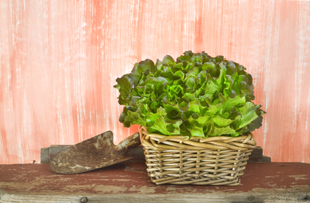 grungy: fresh salad on grungy background