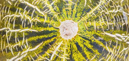 close up macro shot of a fresh melon
