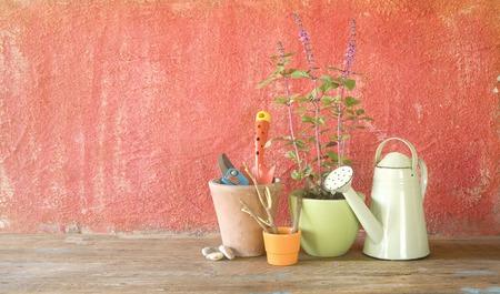 Gardening utensils, springtime gardening, blooming basil, flower pots, good copy space