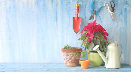 Springtime gardening,gardening utensils, blooming plant, flower pots, good copy space