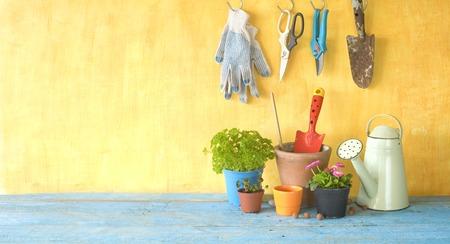 springtime gardening, young flowers,herbs, gardening utensils, free copy space