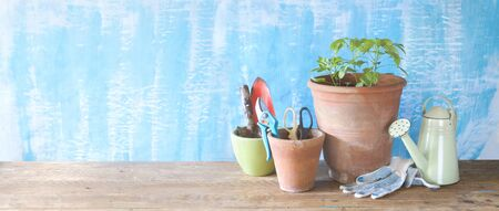 garden tools and seedling, free copy space