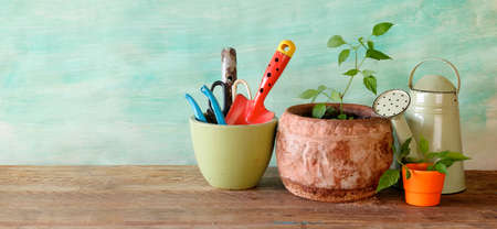 young plants and gardening utensils, springtime gardening, good copy space Zdjęcie Seryjne