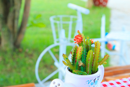 Cactus pots and Small  tree on green background.