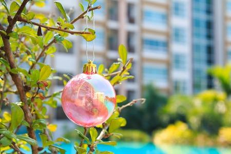 chrismas: Christmas baubles on chrismas tree on  tree,near at pool