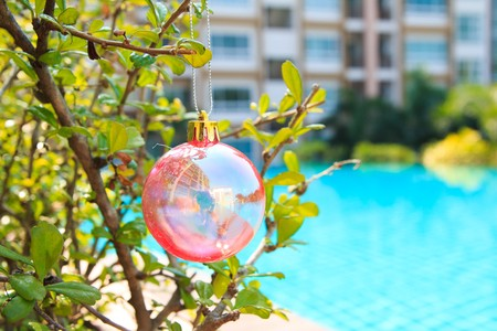 silhouettable: Christmas baubles on chrismas tree on  tree,near at pool