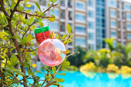 standalone: Christmas baubles on chrismas tree on  tree,near at pool