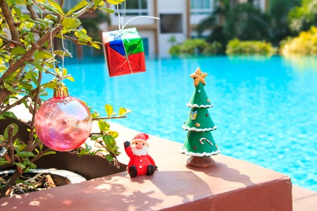 silhouettable: Decorated Christmas on  tree on  tree,near at pool