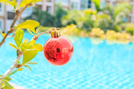 silhouettable: Decorated Christmas on  tree,near at pool