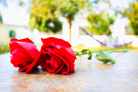 wood table: red rose on wood table in garden