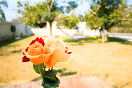 orange roses: Red and orange roses flowers in vase on wood table Stock Photo