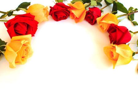 orange roses: Romantic floral frame with Red and orange roses flowers on white background