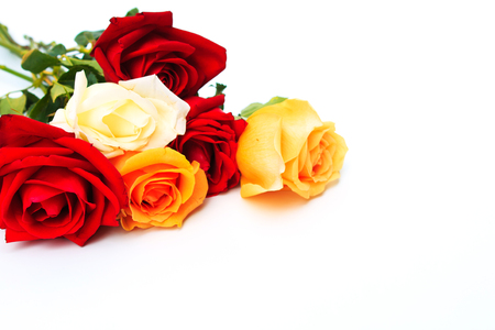 rosas naranjas: Red and orange roses flowers on white background ,valentine day