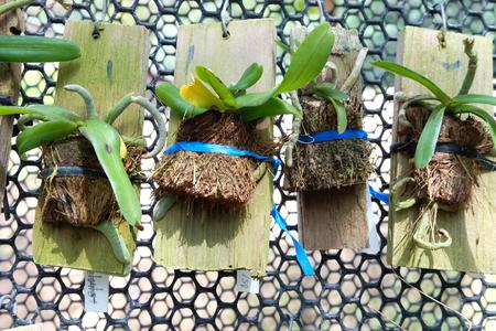 verdant: Plant hanging in garden Stock Photo