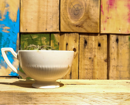 planted: Plant planted in coffee cup. Stock Photo