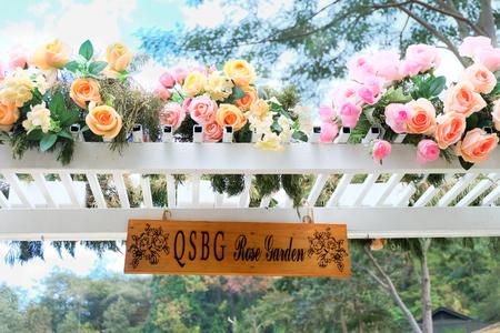 Belle rose colorate in giardino di rose