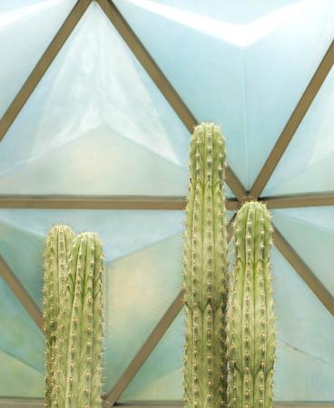 Cactus in garden ,SUANLUANG RAMA IX,Bangkok,Thailand Editorial