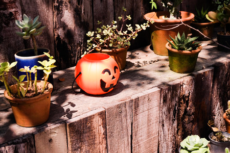 Halloween scary pumpkin in forest.