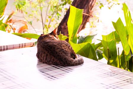 beautiful cat in the garden.