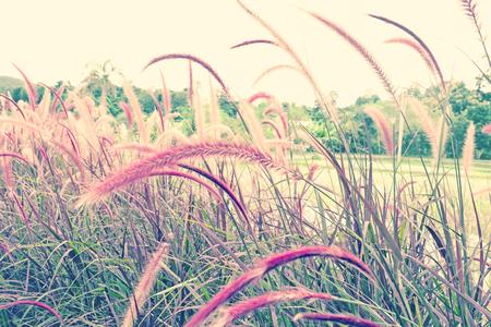 Beautiful grass flower with sunlight.
