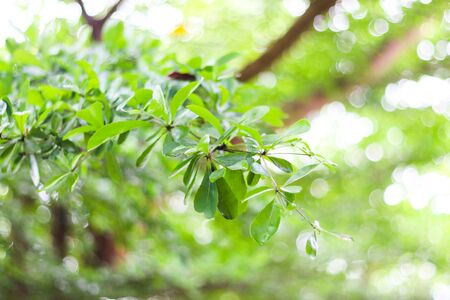 Growth leaf tree nature fresh green bush, tree bokeh background.