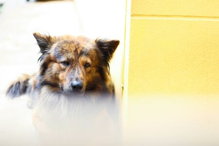 Alone Dog sleeping at Home. Stockfoto