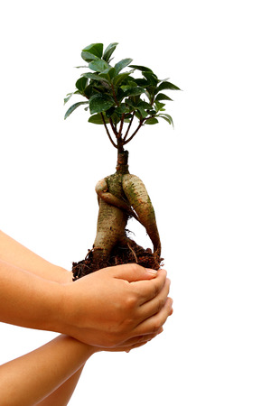 A small tree cupped in a child's hands, supported by mother photo