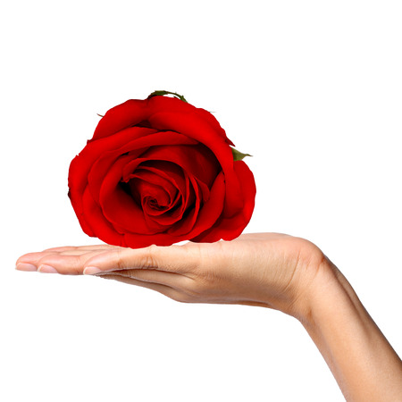 Red Rose in Women Hand
