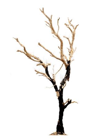 toter baum: Ein toter Baum isoliert auf weißem Hintergrund Lizenzfreie Bilder