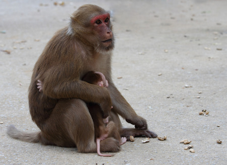 Monkey and her baby in temple of Thailand Stock Photo