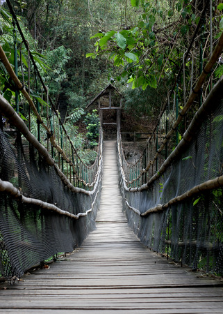 Rope walkway through the treetops in a rainforest
