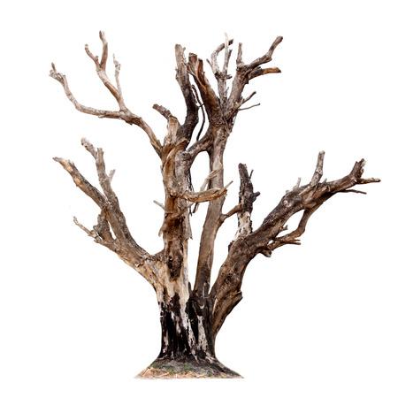 Einzel alten und abgestorbenen Baum auf weißem Hintergrund